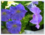 Flowers0012.JPG