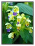 Flowers0035.jpg