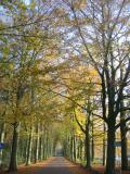 Earls Alley in autumn colours