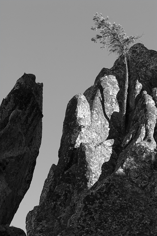 The Tree and the Rock in BW