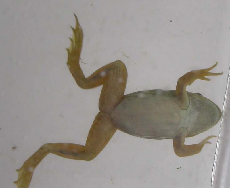 frog2-3.jpg