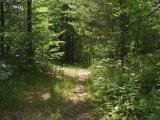 Old logging road on south side of Depot Creek