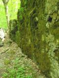 Beech & Hemlock Trails -- May 28, 2005