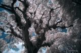 Color Infrared Photography