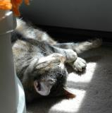 Cats are solar powered