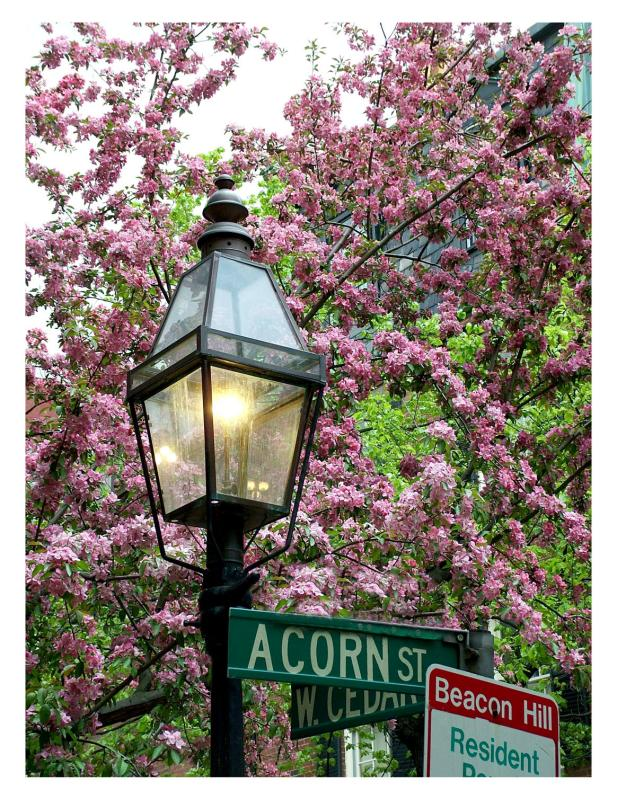 Spring in Beacon Hill