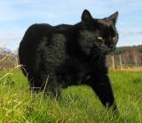 Jasper on the prowl