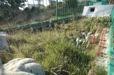 190-Çanakkale Kilitbahir grave