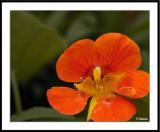 ds20050513_0042awF Fleur.jpg