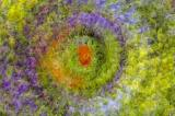 5/14/05 - Pansy Multiple Exposure
