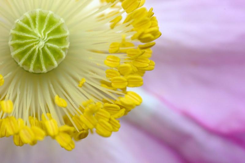 5/27/05 - Poppy Macro
