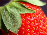 Erdbeere / strawberry