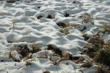 Snow Patches