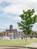 Anglican Cathedral from Liverpool Marina