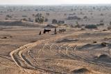 Morning in the Desert