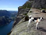 Joop's Dog Log - Wednesday July 21