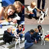 Joop's Dog Log - Saturday July 24