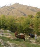 Tamahal near Damas