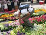 Union Square Flower Market - Spring & Summer