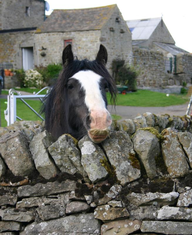 The horse with the handlebar moustache.