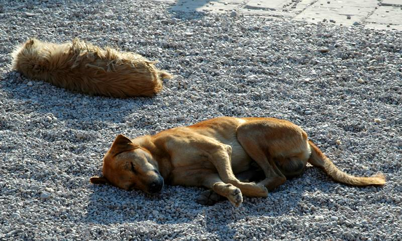 Sleeping dogs at Luxor