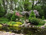 5_18_Lilacs.jpg