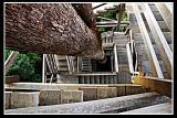 Bangkirai, The Canopy Bridge