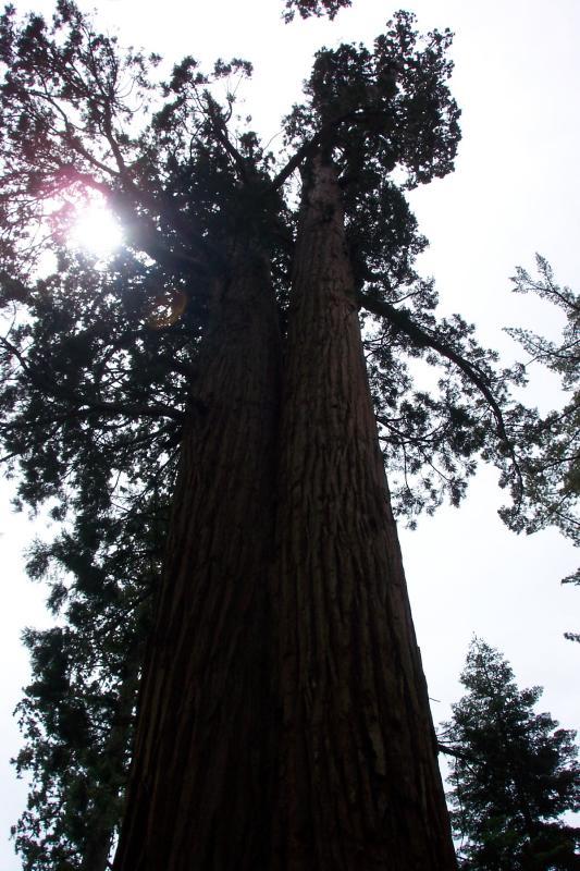 Yosemite Wawona 006.jpg