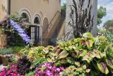 More Italian Flowers