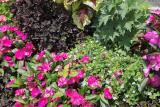 Flower Segment