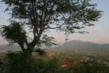 Tree and Luang Prahbrang from Phu Si