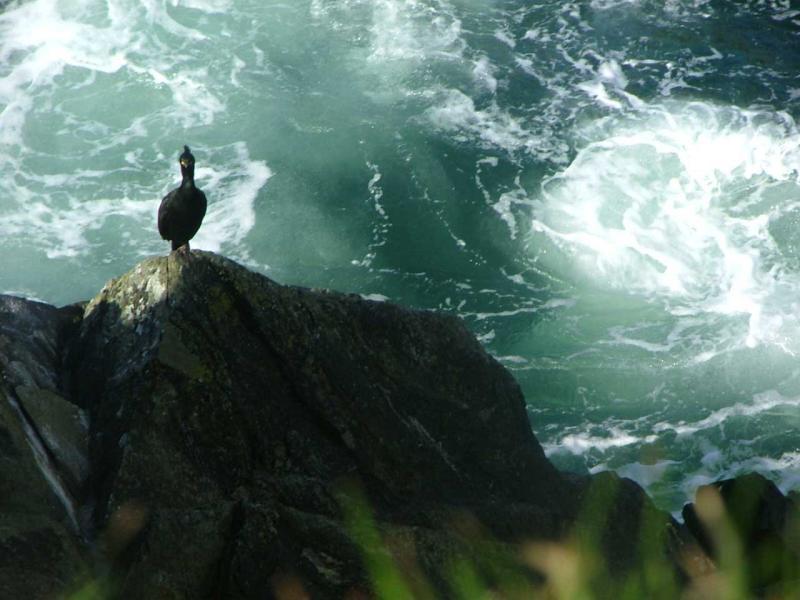 Cormorants Eye View