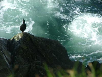 Cormorants Eye View