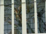 Window Masts