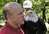 Bald Eagle display