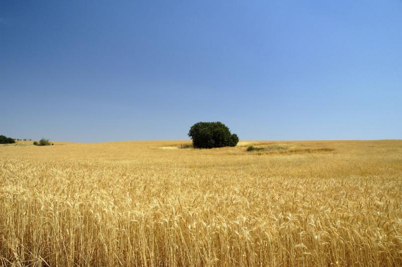 fields near Beit Shemesh
