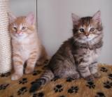 Riki and Pikku