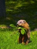 Groundhog Lunch 20050528