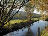 Laurière - autumn