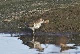 TEB shorebird #1