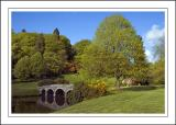 Turf bridge and tree, Stourhead ~ Stourhead