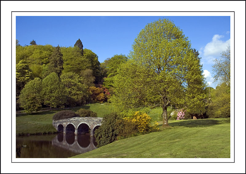 Turf bridge and tree, Stourhead ~ Stourhead