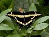 Butterfly2.jpg(146)