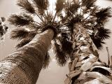 Palms by morey