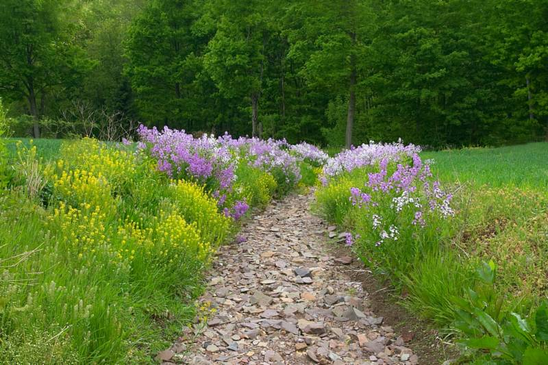 Dry Creek Bed and Flowers