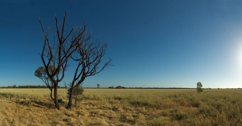_DSC8741 mitchell grass and gidgee conv to panorama