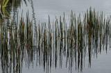 Water Grasses