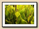 7573 canna leaves green abstract copy.jpg