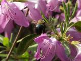 2005-05-11 Bumblebee
