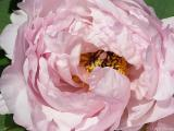 2005-05-15* Bloom